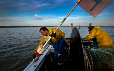 """Capt. George Trice of the """"Gloria J."""" pulls in a gill net marker flag as he and scientists pull in nets set to catch sturgeon in the James River."""