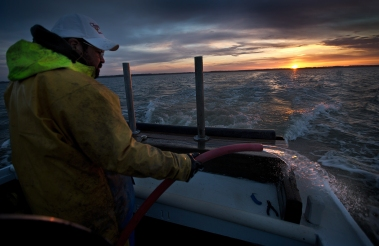 """Jerry Parks waters down the stern as the """"Gloria J."""" as it traveled the James River at 6 a.m. Tuesday. The Virginia Institute of Marine Science tags sturgeons annually. Researchers use gill nets to catch the sturgeon and then bring them on board to attach tags for tracking the fish in the James River and other area waters."""