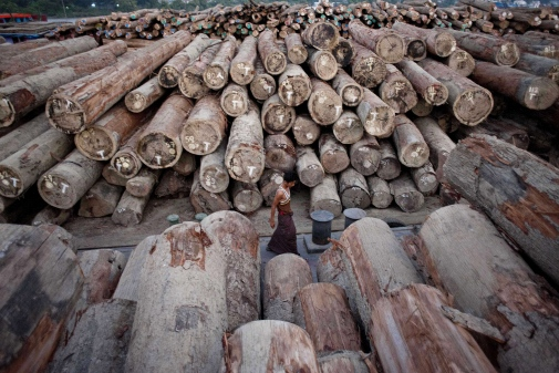 A worker walks past logs on barges along the river near Yangon. Experts say an insatiable world appetite for precious hardwoods is threatening rare species and helping to drive deforestation in one of the last major areas of tropical forest in Asia. AFP PHOTO / YE AUNG
