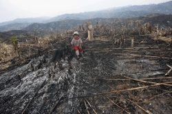 A young girl sits where teak trees once grew in the Bago Region of Myanmar after the land was scorched ahead of replanting. Locals say there are plans to replant the area with valuable teak trees -- though even if they do, these will take up to 80 years to reach maturity. AFP PHOTO / YE AUNG THU