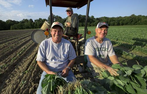 The Wilson brothers are preserving their family tradition by keeping up Wilson's Farm in York County. Thier father Wilson S. Wilson died of heart complications on May 28, 2013.