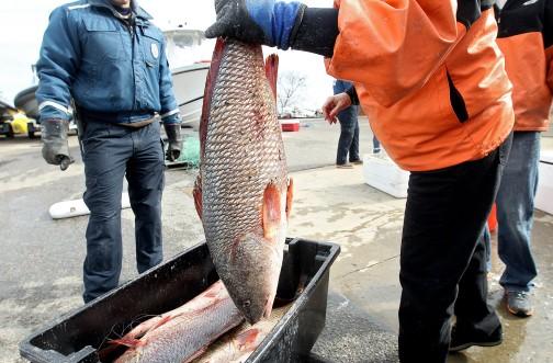 Large Fish Seizure