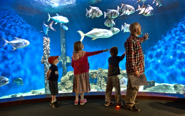Spring break visitors and a school groups from N.C. enjoy a close-up view of an aquarium inside the Virginia Living Museum. The Museum must raise $1.2 million to receive the same amount of funds from the city of Newport News in the current fiscal year. (Joe Fudge)