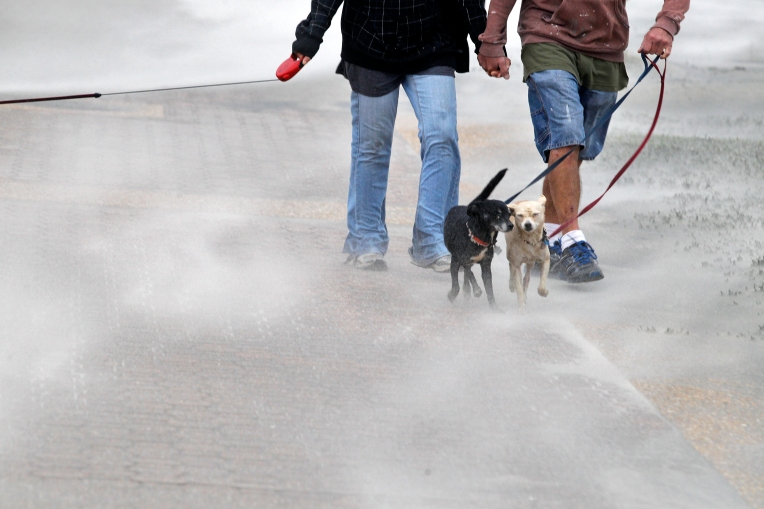 Dogs fight walking into sand and strong wind gusts at Buckroe Beach Friday afternoon October 2, 2015. (Jonathon Gruenke)