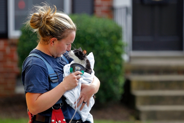Hampton firefighter Jessica Firth provides oxygen to cat after responding to fire in the 100 block of Friendly Drive in the apartment complex Abbington at Northampton Tuesday October 13, 2015.