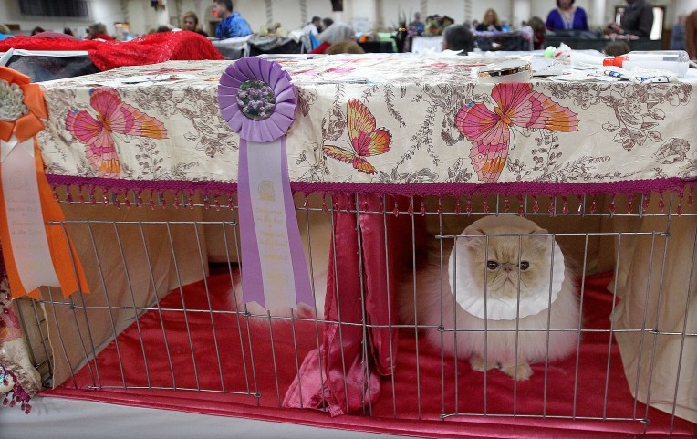 Cat FanciersÕ Association Show