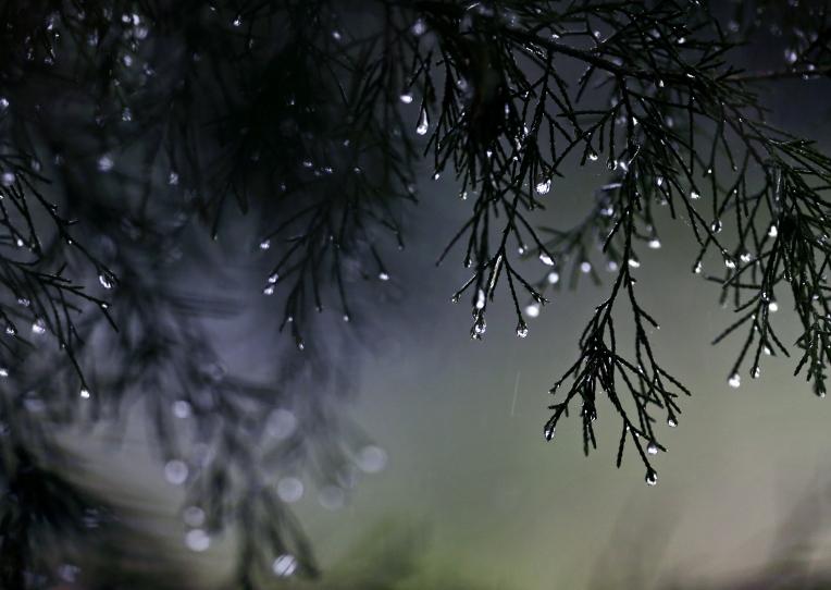 Hampton Rain