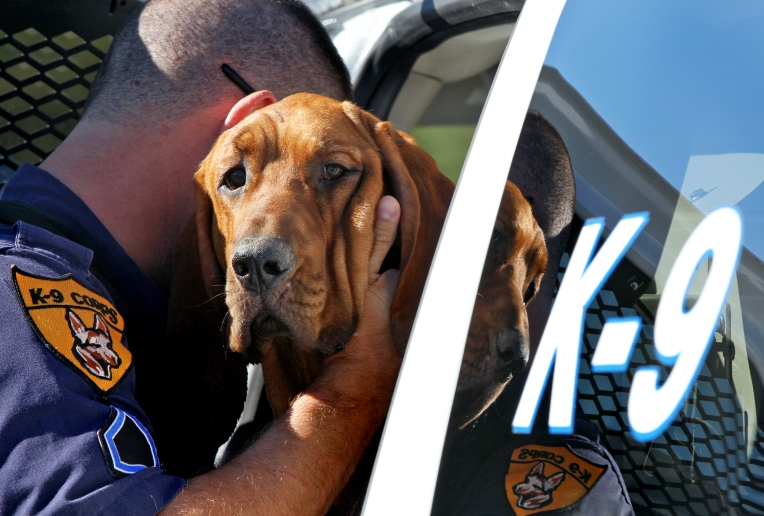 Hampton Bloodhound