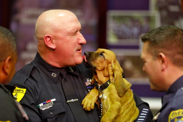 MPO Tom Hendrickson receives a lick from his new partner, Buckshot, after a memorial service for Diesel, Hampton Police Department's K-9, Thursday afternoon at Fort Monroe Theatre December 8, 2016. Diesel, a seven-year-old bloodhound, died of cancer November 26.