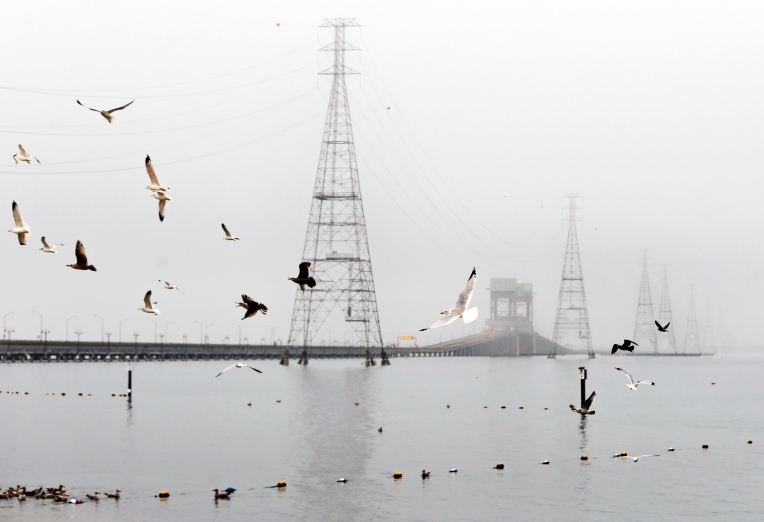 Fog Feature