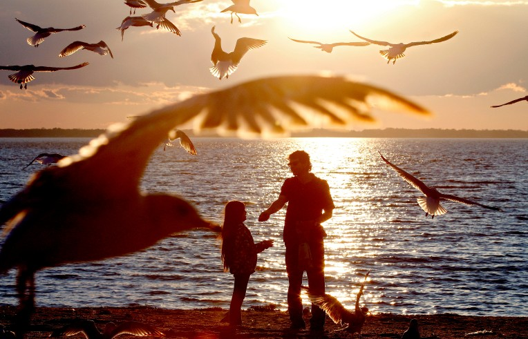 Kayden Staats and her dad Shawn are swarmed by seagulls as they throw bread on the sand at Huntington Beach Wednesday February 15, 2016.
