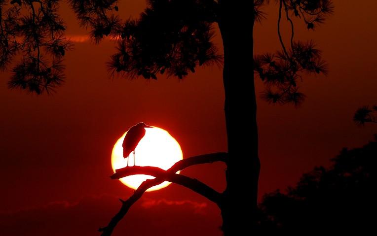 Heron of the Sun