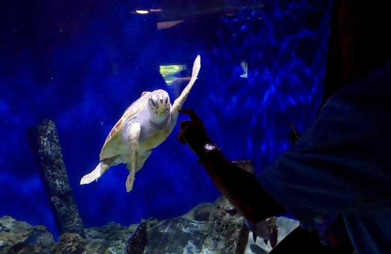 Living Museum Turtle